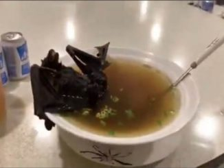 Bat Soup in China